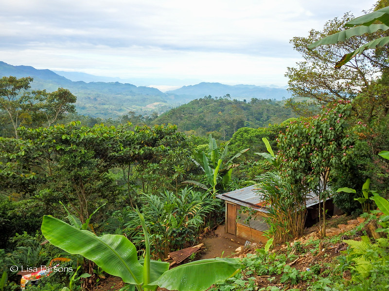 View into the Jungle