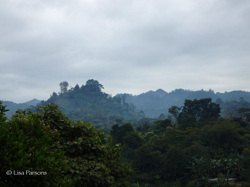 Thicker Jungle
