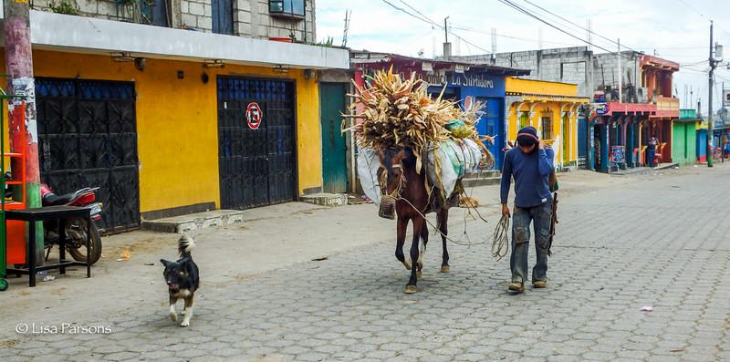 Transporting Corn Husks