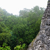 Jungle and the Edge of a Tower