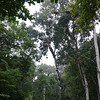 Jungle Forest Overhead