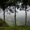 Mist Covered Farm Land