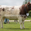Rutland County Show 2018<br /> Beef Shorthorn champion and overall champion Podehole Tessa Kerboodle owned by Harry Horrell<br /> ©Tim Scrivener Photographer 07850 303986<br /> ....Covering Agriculture In The UK....