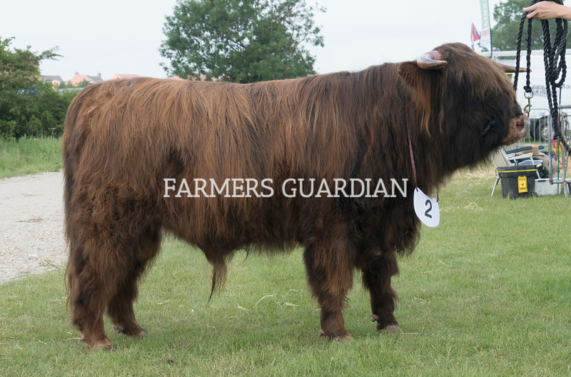 Rutland County Show 2018<br /> Highland Champion Logan of April owned by G J H Rainey<br /> ©Tim Scrivener Photographer 07850 303986<br /> ....Covering Agriculture In The UK....