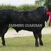 Rutland County Show 2018<br /> Commercial champion Black Jack owned by J K Beckett & Son<br /> ©Tim Scrivener Photographer 07850 303986<br /> ....Covering Agriculture In The UK....
