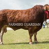 Rutland County Show 2018<br /> Any other pure continental breed champion and reserve overall champion Truman Mozart owned by Barwood and Padfield<br /> ©Tim Scrivener Photographer 07850 303986<br /> ....Covering Agriculture In The UK....