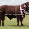 Rutland County Show 2018<br /> Junior Champion Sudbrooke  Whiskey Mac owned b Miss E Benge <br /> ©Tim Scrivener Photographer 07850 303986<br /> ....Covering Agriculture In The UK....