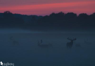 Deers over the fog