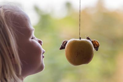 36/52 - Óda na jablko