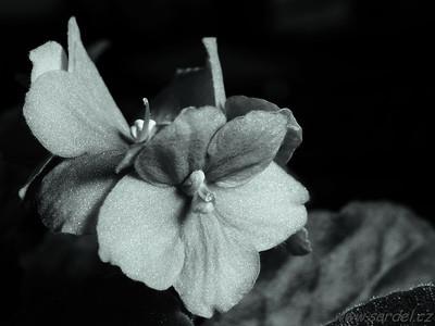 Massa close-up filter +4 (Canon EOS 60D + Canon 35 / 2)