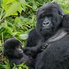 Hirwa  Group female with child