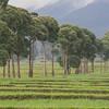 Demonstration Farm at Kinigi