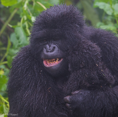 Hirwa Group, female with month old baby