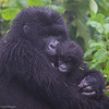 Hirwa (Lucky) Group mother with new baby