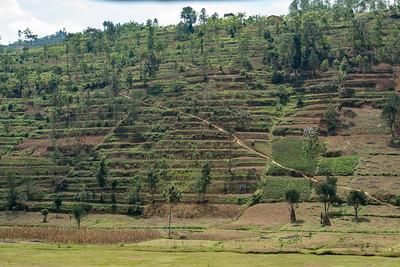 Every hillside was terraced