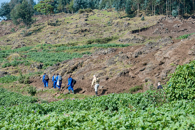Our gorilla trekking porters wore blue uniforms; here we are passing a field of potatoes