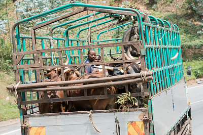 Cattle truck on the road between Kigali and Kinigi