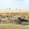 Panorama with elephants, wildebeest, zebra, and safari truck