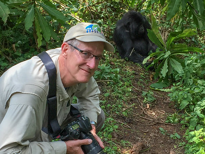 This gorilla has a secret admirer.