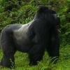 Rwanda-6298