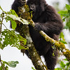 Rwanda14-6790