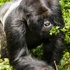 Rwanda14-7340