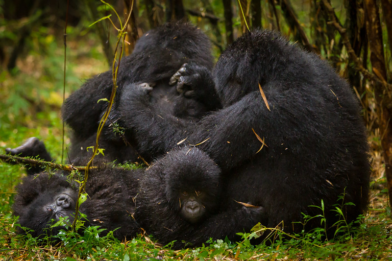 Rwanda-5507