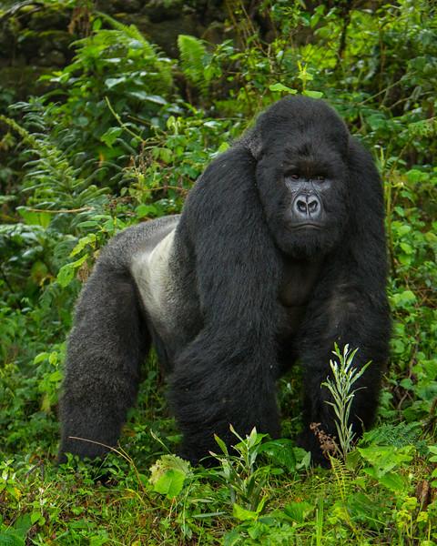 Rwanda-6336