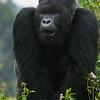 Rwanda-6181