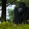 Rwanda-6620