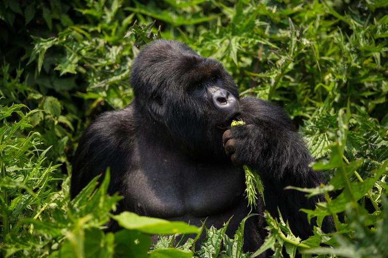 Rwanda14-7954