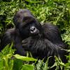 Rwanda14-7935