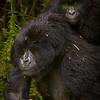 Rwanda-5346