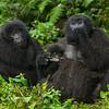 Rwanda-6396