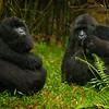 Rwanda-5593