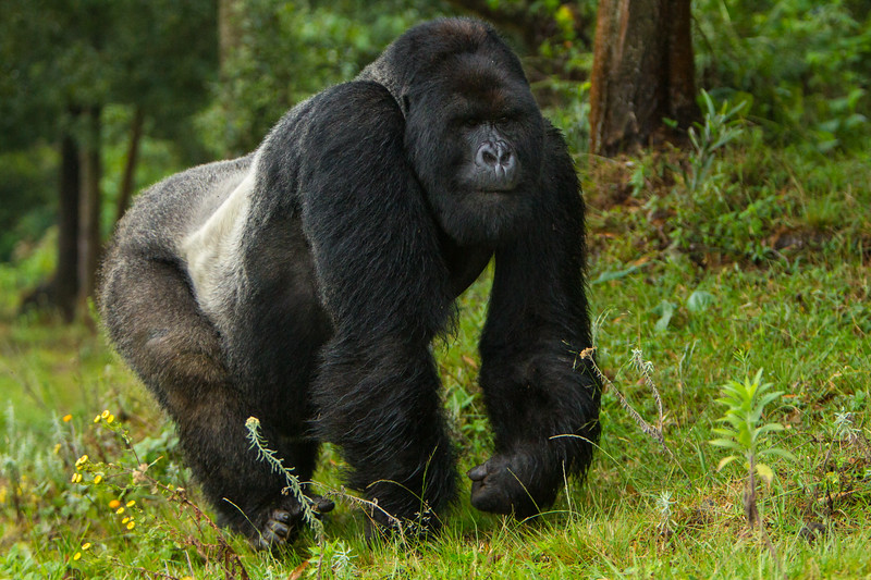 Rwanda-6692