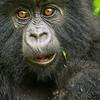 Rwanda-2811