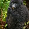 Rwanda-6044