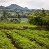 Rwanda-4676