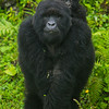 Rwanda-6149
