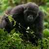 Rwanda-2677