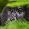 Rwanda-2511