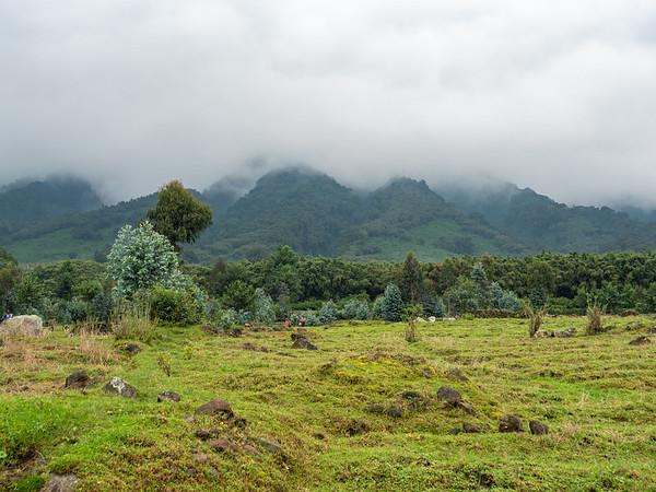 Virunga mist