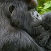 Rwanda-3398