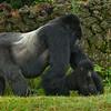 Rwanda-6278