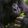 Rwanda-2591