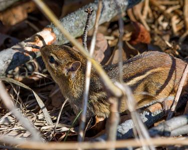 Ryerson Woods Spring