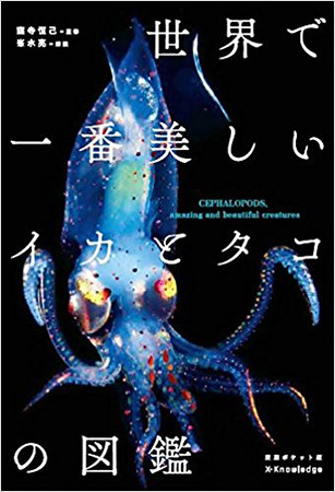 Picture book of the most beautiful squid and octopus in the world
