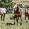Roan Bookends