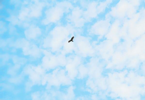 S. Day Dream 03